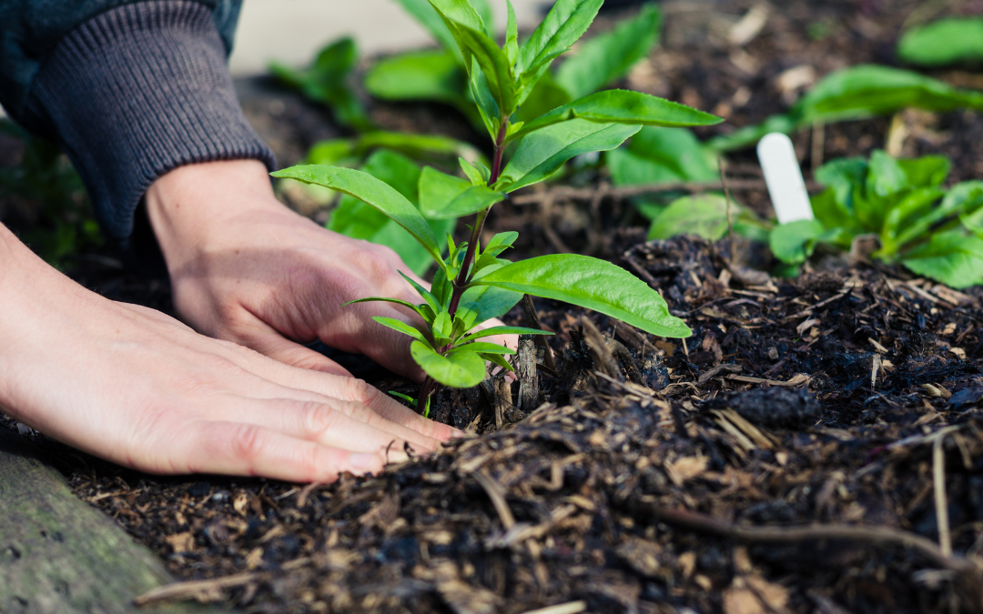6 Ways That You Can Improve Your Garden