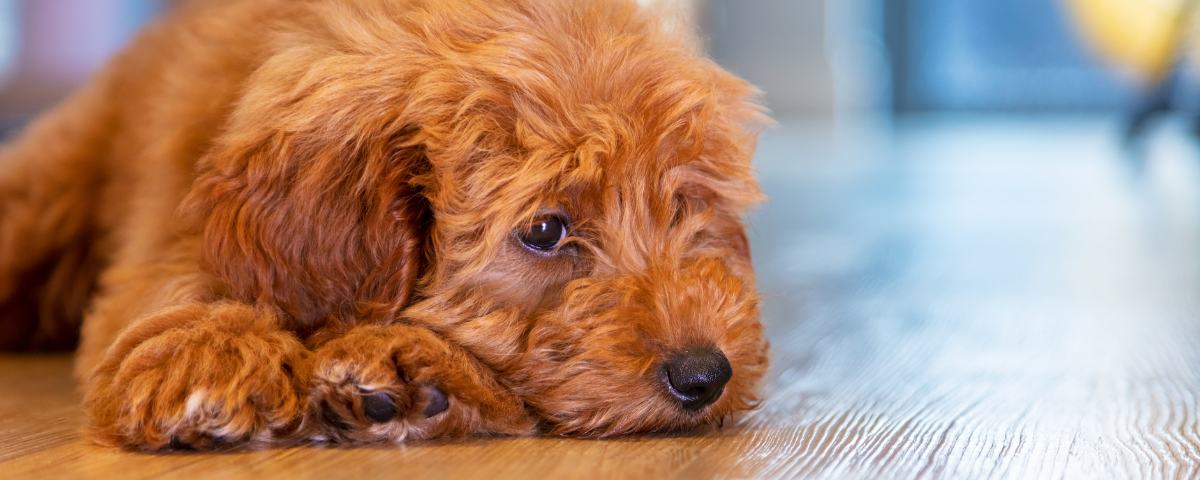 How Does CBD Affect Dogs?